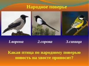 1.ворона  2.сорока 3.синица  Народное поверье Какая птица по народному по