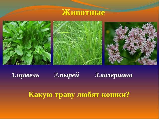 1.щавель  2.пырей 3.валериана  Животные Какую траву любят кошки?