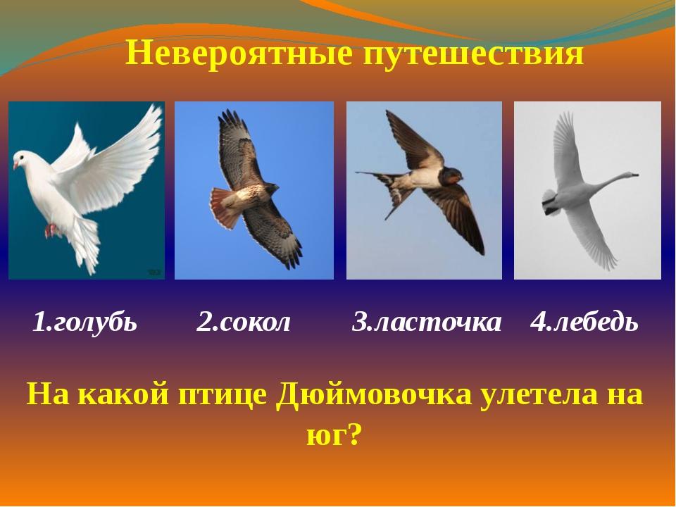 1.голубь 2.сокол 3.ласточка 4.лебедь  Невероятные путешествия На какой птиц...