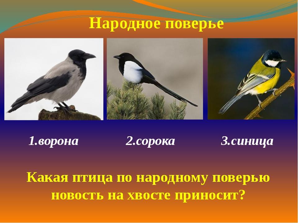 1.ворона  2.сорока 3.синица  Народное поверье Какая птица по народному по...