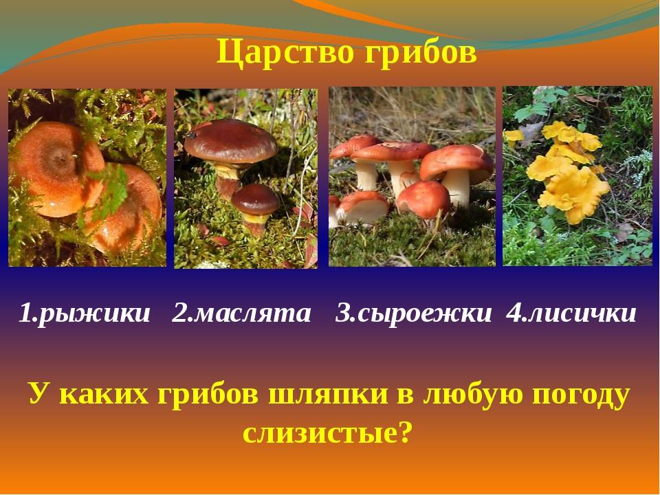 1.рыжики 2.маслята3.сыроежки 4.лисички  Царство грибов У каких грибов шляп...