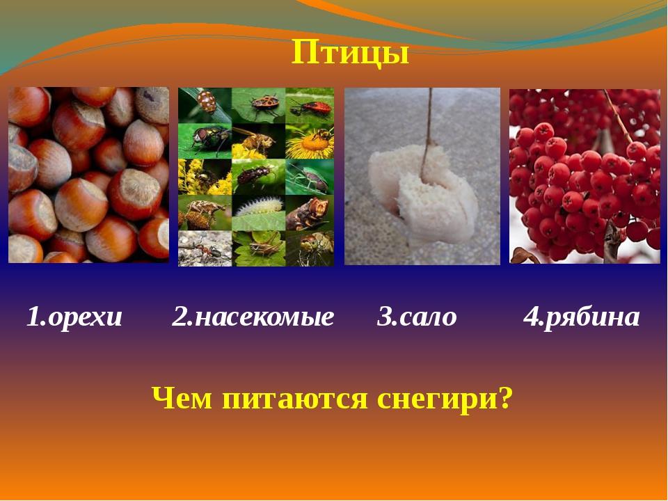 1.орехи  2.насекомые 3.сало 4.рябина  Птицы Чем питаются снегири?