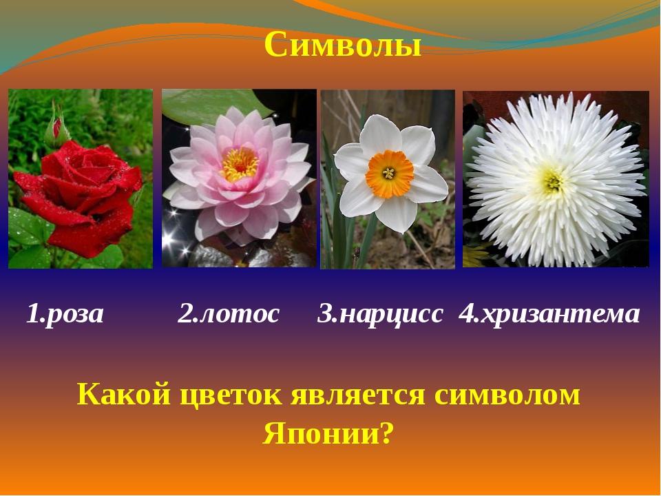 1.роза  2.лотос 3.нарцисс 4.хризантема  Символы Какой цветок является симв...