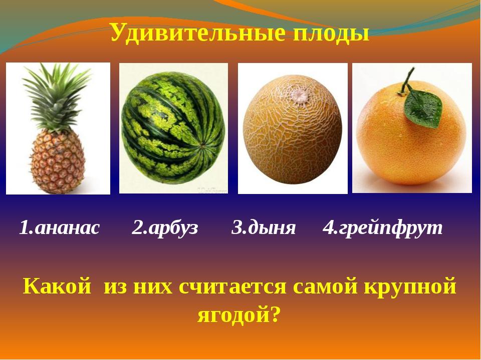 1.ананас 2.арбуз  3.дыня 4.грейпфрут  Удивительные плоды Какой из них счит...