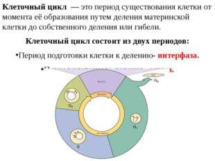 Клеточный цикл— это период существования клетки от момента её образования п