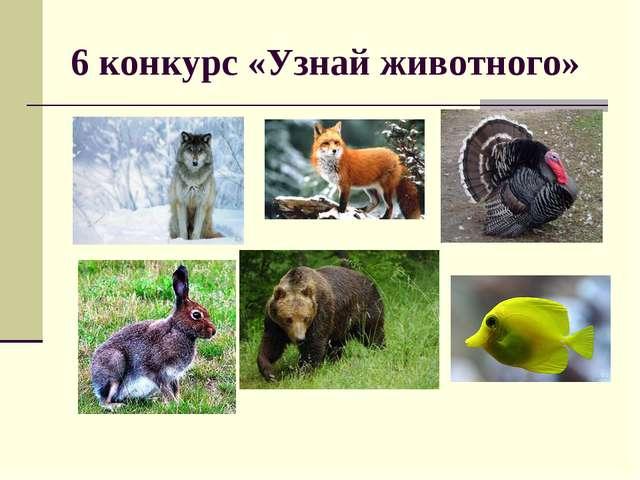 6 конкурс «Узнай животного»