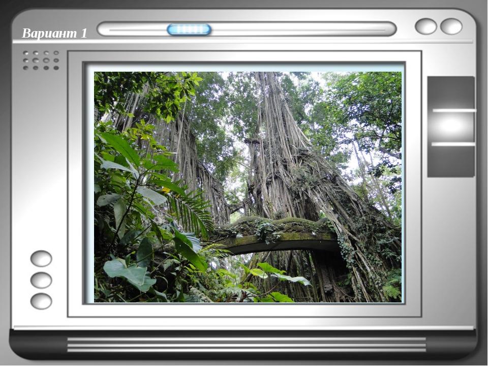 Вариант 1 Тропические лианы – вьющиеся растения, которые растут в жарких стра...