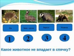 Какое животное не впадает в спячку? Заяц – русак Медведь Барсук 4 3 2 1 Еж