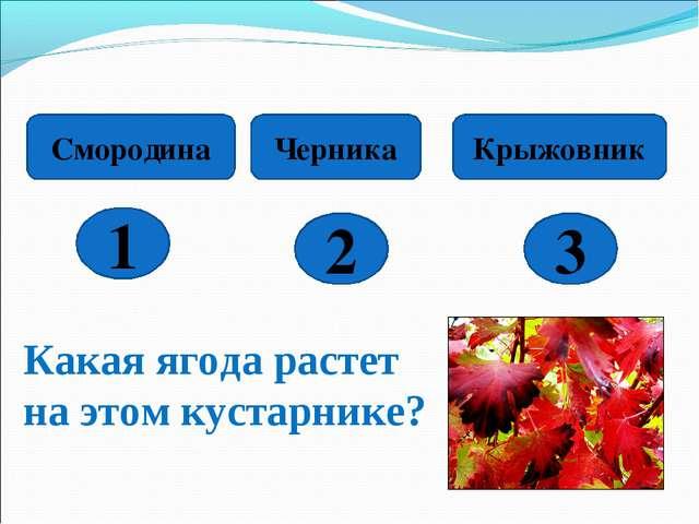 1 2 3 Смородина Черника Крыжовник Какая ягода растет на этом кустарнике?