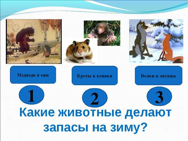 Какие животные делают запасы на зиму? Волки и лисицы Кроты и хомяки Медведи и...