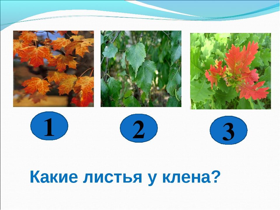 3 2 1 Какие листья у клена?