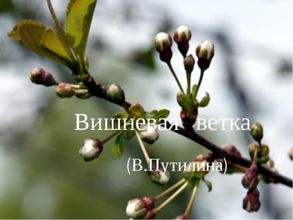 Вишневая ветка (В.Путилина)