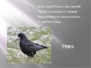 Всех перелётных птиц черней, Чистит он пашню от червей. Взад-вперёд по пашне