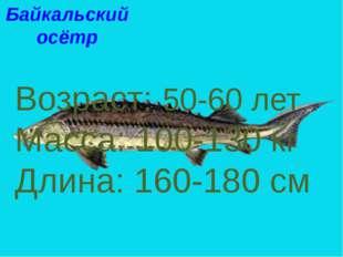 Байкальский осётр Возраст: 50-60 лет Масса: 100-130 кг Длина: 160-180 см Байк