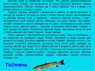 Крупная рыба из семейства лососевых. Это широко распространенная рыба в реках
