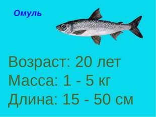 Возраст: 20 лет Масса: 1 - 5 кг Длина: 15 - 50 см Омуль