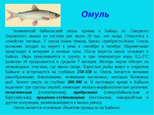 Омуль Знаменитый байкальский омуль проник в Байкал из Северного Ледовитого ок