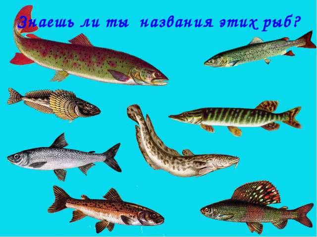 Знаешь ли ты названия этих рыб?