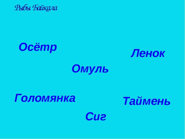 Рыбы Байкала Осётр Таймень Ленок Сиг Омуль Голомянка