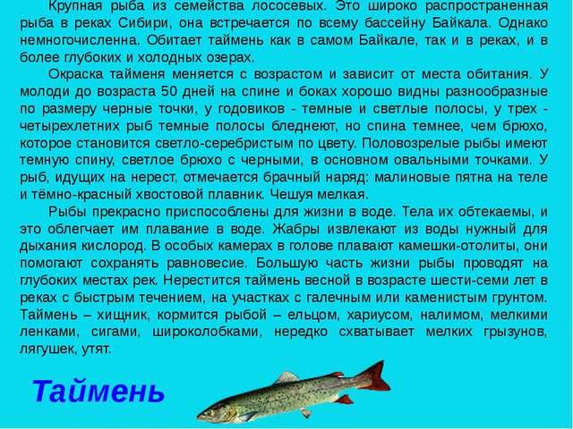 Крупная рыба из семейства лососевых. Это широко распространенная рыба в реках...