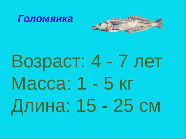 Возраст: 4 - 7 лет Масса: 1 - 5 кг Длина: 15 - 25 см Голомянка