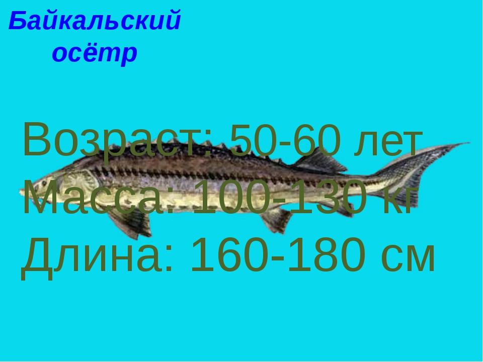 Байкальский осётр Возраст: 50-60 лет Масса: 100-130 кг Длина: 160-180 см Байк...