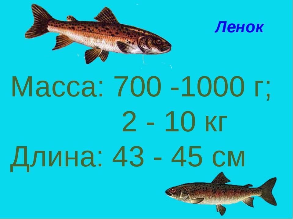 Масса: 700 -1000 г; 2 - 10 кг Длина: 43 - 45 см Ленок Ленок