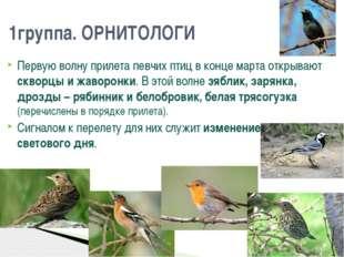 Первую волну прилета певчих птиц в конце марта открывают скворцы и жаворонки.