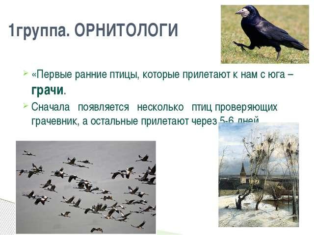 «Первые ранние птицы, которые прилетают к нам с юга – грачи. Сначала появл...