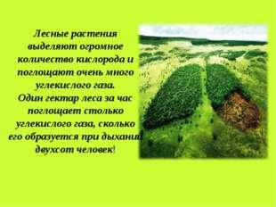 Лесные растения выделяют огромное количество кислорода и поглощают очень мног