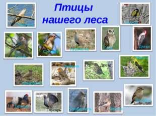 Птицы нашего леса Жаворонок Сойка Сова Синица Дятел Иволга Воробей Зяблик Дро