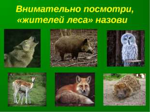 Внимательно посмотри, «жителей леса» назови