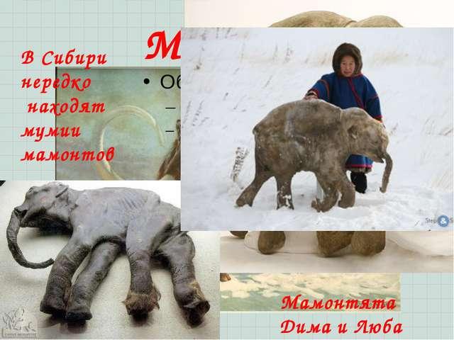 Мамонт В Сибири нередко находят мумии мамонтов Мамонтята Дима и Люба