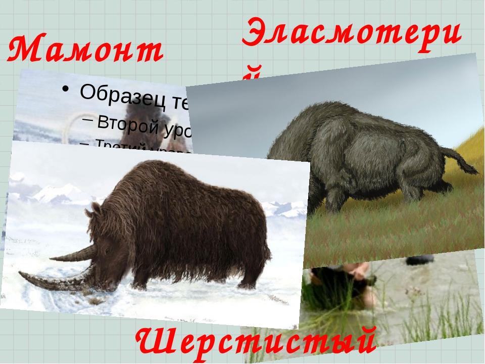 Мамонт Эласмотерий Шерстистый носорог