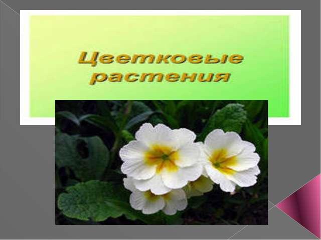 Конспект урока по теме покрытосеменные растения 7 класс