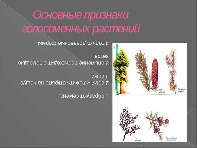 Основные признаки голосеменных растений 1.образуют семена 2.семя « лежит» отк...