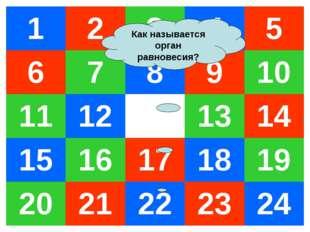 Как называется орган равновесия? 12345 678910 11121314 1516171