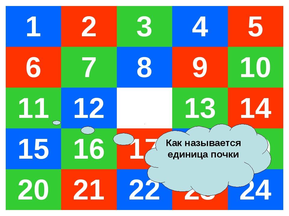 Как называется единица почки 12345 678910 11121314 1516171819...