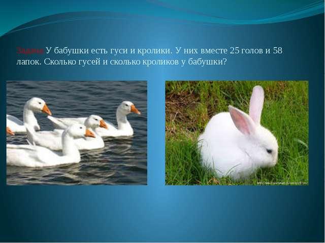 Задача:У бабушки есть гуси и кролики. У них вместе 25 голов и 58 лапок. Сколь...
