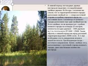 В зимний период листопадные деревья кислород не выделяют, его вырабатывают х