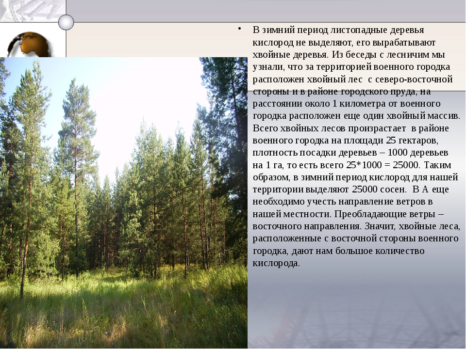 В зимний период листопадные деревья кислород не выделяют, его вырабатывают х...