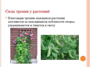 Сила трения у растений Сила трения о грунт корнеплодов способствует удержанию
