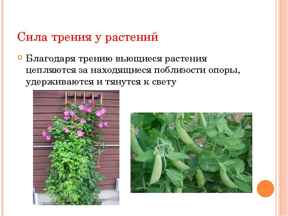 Сила трения у растений Сила трения о грунт корнеплодов способствует удержанию...