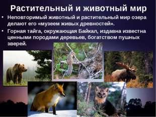 Растительный и животный мир Неповторимый животный и растительный мир озера де