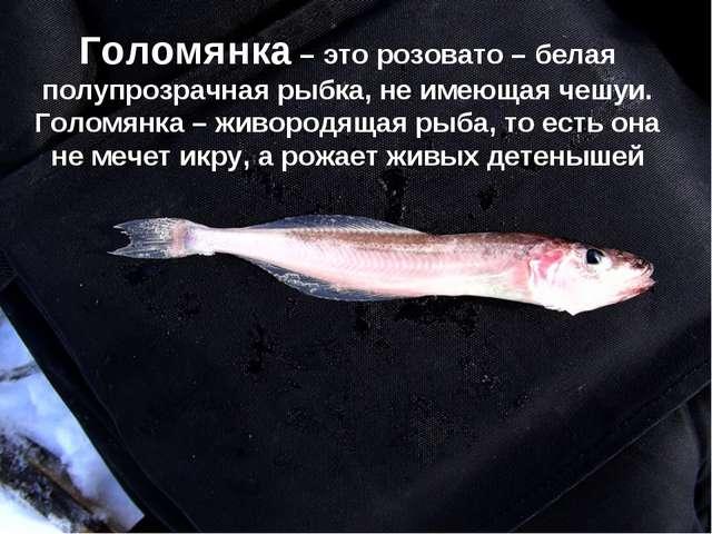 Голомянка – это розовато – белая полупрозрачная рыбка, не имеющая чешуи. Голо...