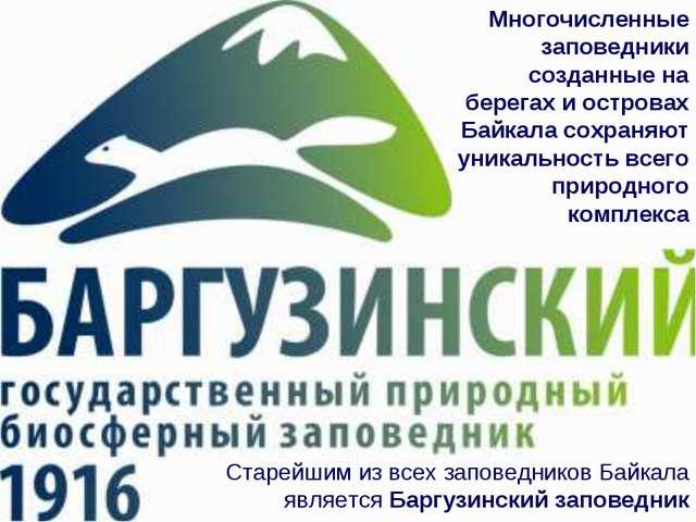 Многочисленные заповедники созданные на берегах и островах Байкала сохраняют...