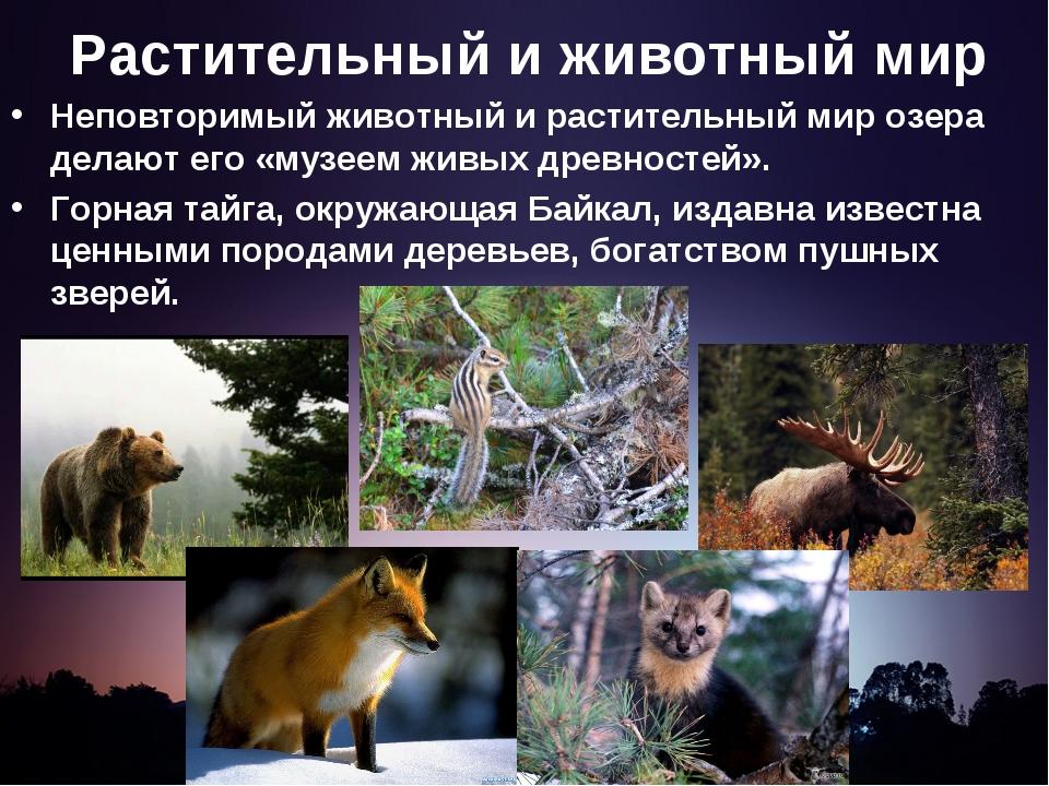 Растительный и животный мир Неповторимый животный и растительный мир озера де...