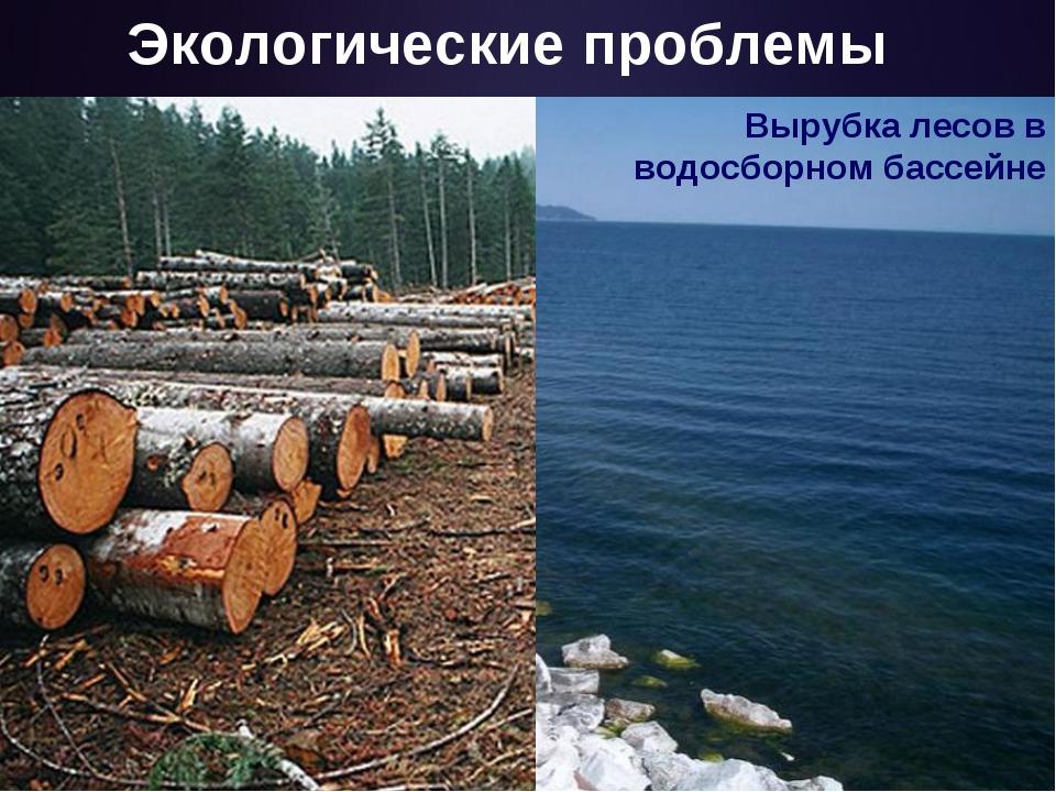 Экологические проблемы Вырубка лесов в водосборном бассейне