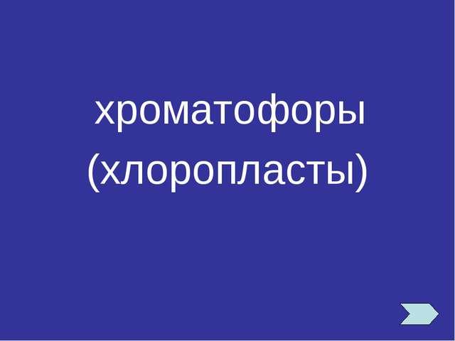 хроматофоры (хлоропласты)