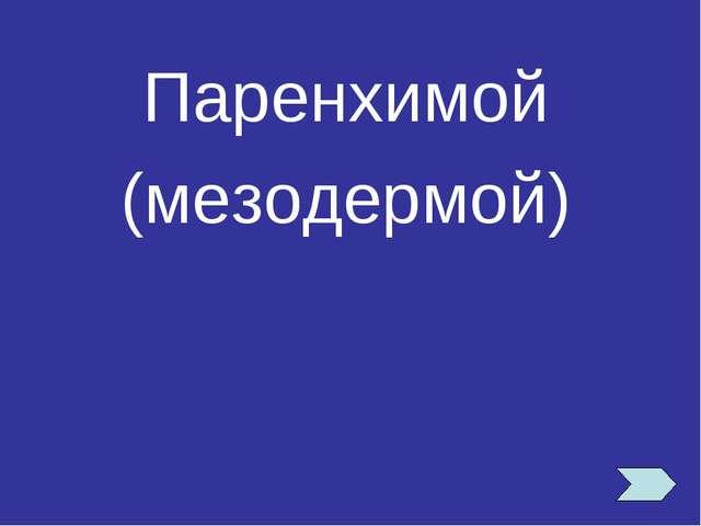 Паренхимой (мезодермой)
